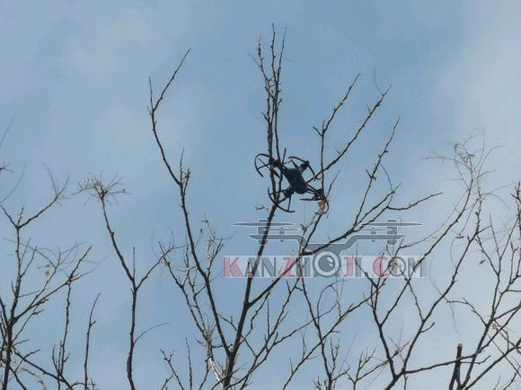 tello上树喽,第一次室外加wifi放大器直接上树